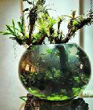 مشاوره، طراحی و اجرای انواع اکوسیستم طبیعی جنگلی، آبزی، جانوری